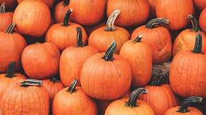 1920x1080 Wallpaper pumpkin, harvest ...