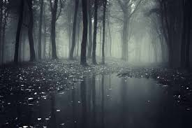 Zwart Bos Mysterieus Xxl Fotobehang