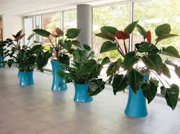 office greenery. a healthy selection of plants office greenery c