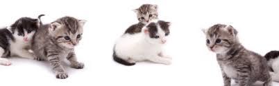 über Die Hauskatze Felis Silvestris Catusfindet Man Sehr Viele