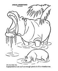 Small Picture free Hippopotamus Hippo coloring page African Safari Pinterest
