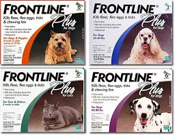 frontline plus ingredients. One Of The Best Flea Protections. Frontline Plus\u2014Your Plus Ingredients
