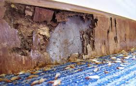logo termite termite damaged wood