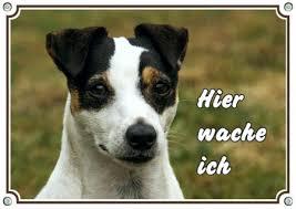 Hund Terrier Günstig Sicher Kaufen Bei Yatego