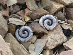 8 weird jobs for students bogazici77 next job on our list worm watcher is one more possibility there are projects out there at universities that requires the help of students as worm watcher