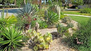 Small Picture Experts offer advice for drought tolerant landscaping in Southern