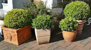 container gardening for beginners. Why Container Gardening? Gardening For Beginners