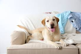 should you let your dog on the couch