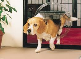 looking for the perfect pet door by