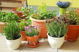 Small Picture 10 Easy Kitchen Herb Garden Ideas to Grow Culinary herbs