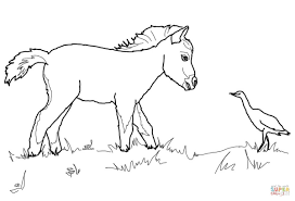 Small Picture Miniature Horse Foal and Bird coloring page Free Printable