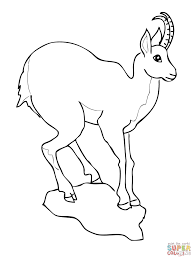 Small Picture European Goat Antelope Chamois coloring page Free Printable
