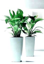 white plant pots amazing home and interior decoration artistic indoor plants from large pot garden uk