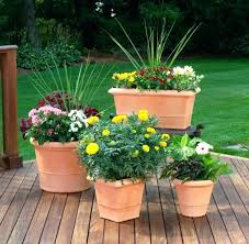 potted outdoor plants beautiful potted plants stunning flower planter ideas for patio patio potted plant and