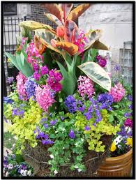 Small Picture 17 Best images about Flowers on Pinterest Container gardening