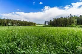 grass field. Field Grass Forest Trees Sky Landscape R Wallpaper P
