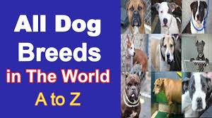 All Dog Breeds In The World A Z All Dog Species Name