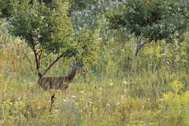 Why More Hunters Should Be Planting Fruit Trees For Deer Best Fruit Trees For Deer