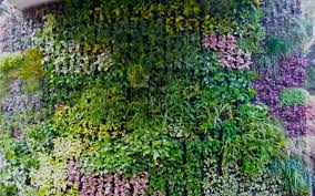 Creeper Plant Stock Images RoyaltyFree Images U0026 Vectors Wall Climbing Plants India