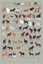 Pop Chart Lab Horses A Chart Of Notable Breeds Amazon Co