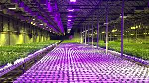 hydroponics garden. Wholesale Pricing For Commercial Cultivation Hydroponics Garden