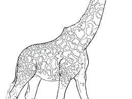 Giraffe Printable Template Free Giraffe Template Printable Pictures Of Giraffes Print Stencil