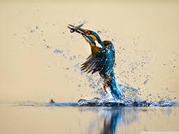 Výsledek obrázku pro water bird