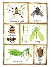 beneficial insects get to know the good garden bugs farm and garden grit