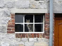 window from outside looking in. Delighful Outside Belgium Outside Looking In Inside Out Cat In A Window  Dinant In Window From Looking M