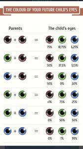 Eye Colour Prediction Chart Eye Color Prediction Chart Interesting Page 5