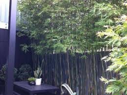 Small Picture 33 best Bamboo screening images on Pinterest Landscaping Bamboo