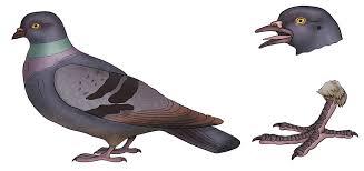 Лабораторная работа Изучение внешнего строения птиц класс   птицы hello html m4b9cee3f png