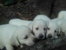pups ready this month 8 17