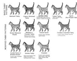 Tabby Patterns Stunning Tabby Patterns Cats CatAddiction Pinterest Cat And Animal