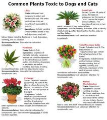 cat safe plants toxic plants for cats