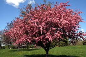 Image result for flowering trees