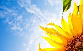 壁紙 夏らしい向日葵の 壁紙 ひまわり Naver まとめ
