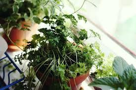 grow an indoor window sill herb garden