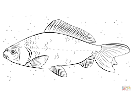 Small Picture Koi carp coloring page Free Printable Coloring Pages
