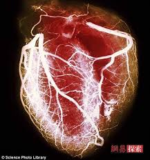 essay on human heart biology the human heart term paper 895 custom essays