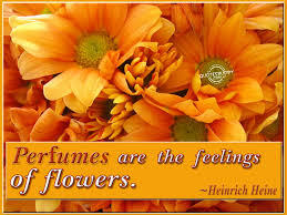 Beautiful Quotes About Life And Flowers Best Of Beauty Quotes Flowers Quotes And Picture Of The Orange Flowers