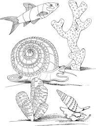 Disegno Di Lumaca Di Mare Mollusco Marino Da Colorare Disegni Da