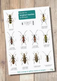 Bee Identification Chart Uk Guide To Longhorn Beetles Laminated Id Chart
