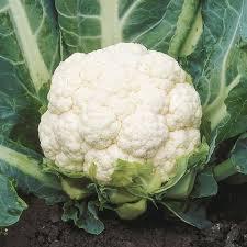 cauliflower. Plain Cauliflower Growing Information Cauliflower Throughout