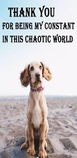 Get 217 Dog Best Friend Quotes Hd Wallpaper Picticu