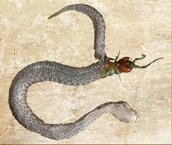 The two types of snakes • poisonous snakes. Last Supper Centipede Dies Eating Way Out Of Snake Belly