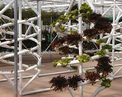 spiral hydroponics epcot