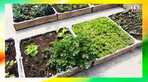 Rooftop Kitchen Garden How To Setup Rooftop Kitchen Garden Step By Step Instructions