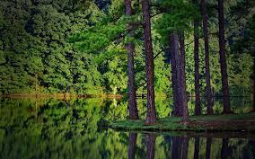 hd wallpapers nature forest. Modren Nature Forest Wallpaper Hd  ORE WALLS For Hd Wallpapers Nature Forest U