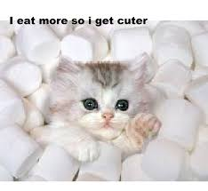 cute kittens in marshmallows. Cute Kittens Images Kitten In Marshmallows HD Wallpaper And Background Photos To Fanpop